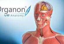 Anatomie en réalité virtuelle