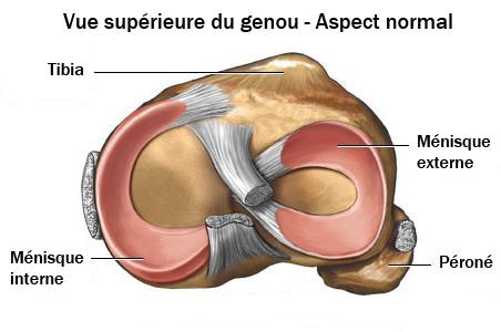 Anatomie des ménisques