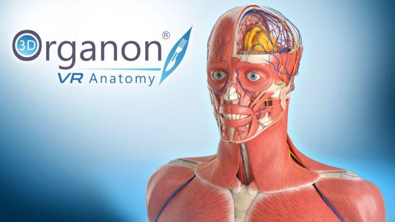 Étudiants et praticiens peuvent désormais étudier l'anatomie en réalité virtuelle