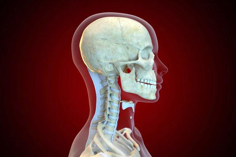 Rachis cervical – Anatomie et fonctions